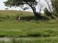 grynderup-sø-susanne